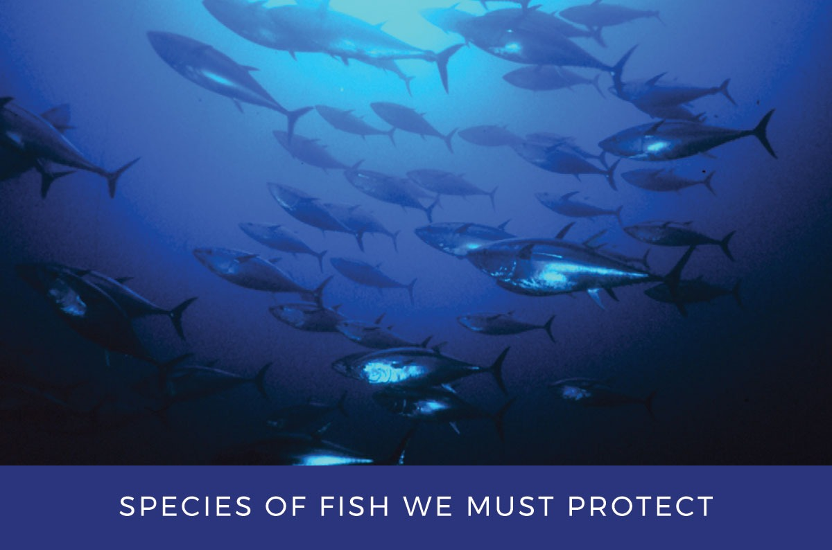 Species of fish we need to protect